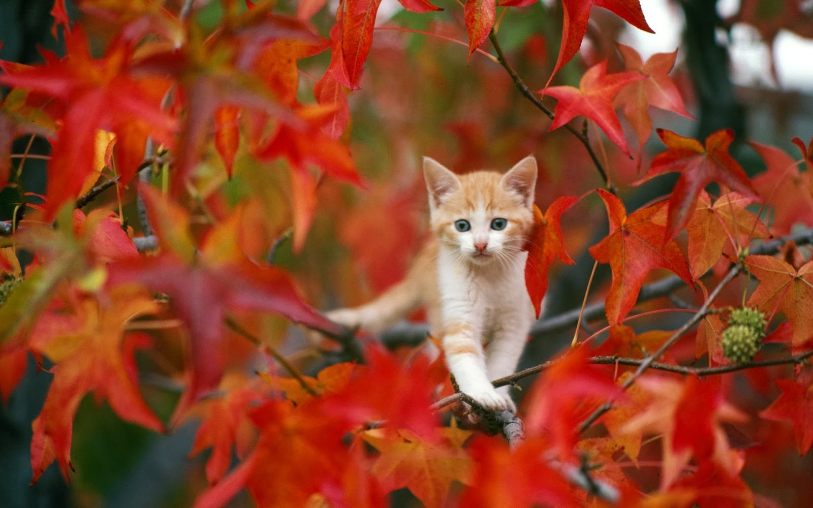 cat_in_autumn-wide