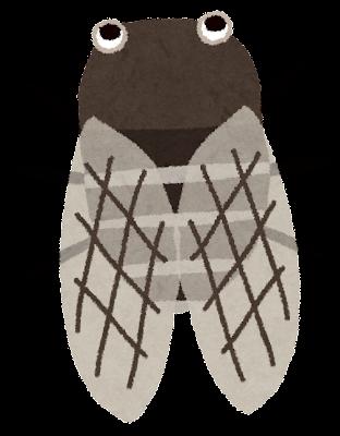 クマゼミのイラスト(蝉)