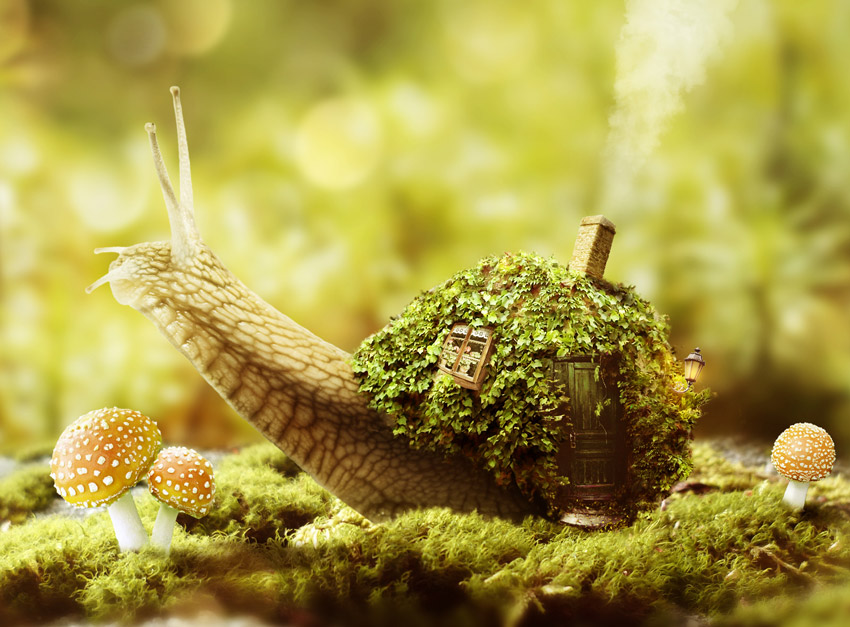 Fantasy Snail Photo Manipulation by Tutsplus