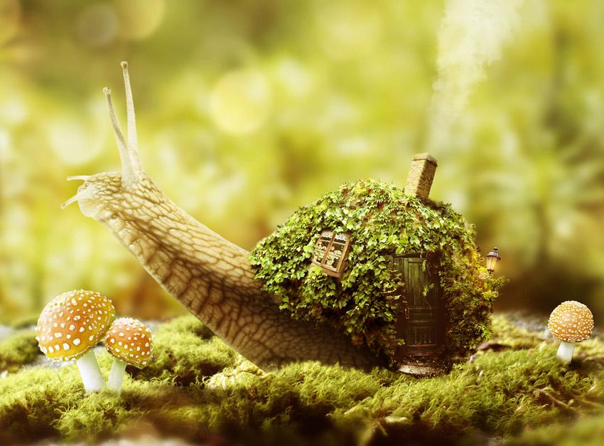 Fantasy Snail Photo Manipulation by Tutsplus