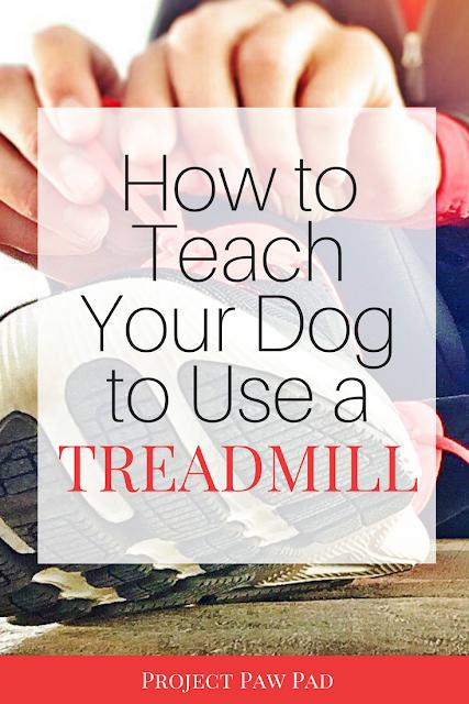 How To Train Dog To Use Treadmill