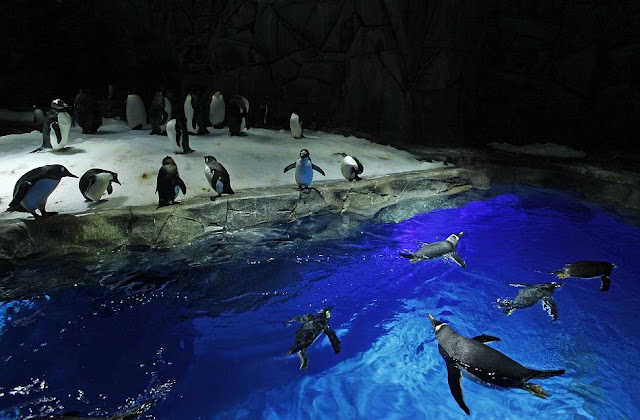 Ocean Park in Hong Kong, Penguins Swim Photos, Adventure Photos, Ocen Park Images, Worlds Best Place to Travel, Worlds Beautiful Places to Travel, Worlds Best places to visit, best places to visit in world, worlds best place to visit before die, amazing places to visit