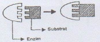 Perhatikan gambar mekanisme kerja enzim berikut ini ...