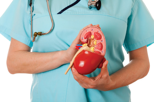 Check Out The Causes Of Kidney Problem, Symptoms And How To Prevent It