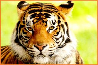 Penggolongan Jenis Hewan Berdasarkan Makanannya, herbivora, karnivora, omnivora, isektivora