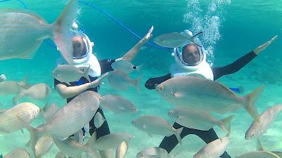 sea trek dance with fish