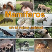 edupunto,mamiferos,reino,animal