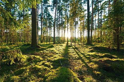 Pengertian Hutan Dan Jenis-jenis Hutan
