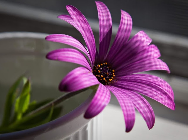 Purple-flower-Wallpaper