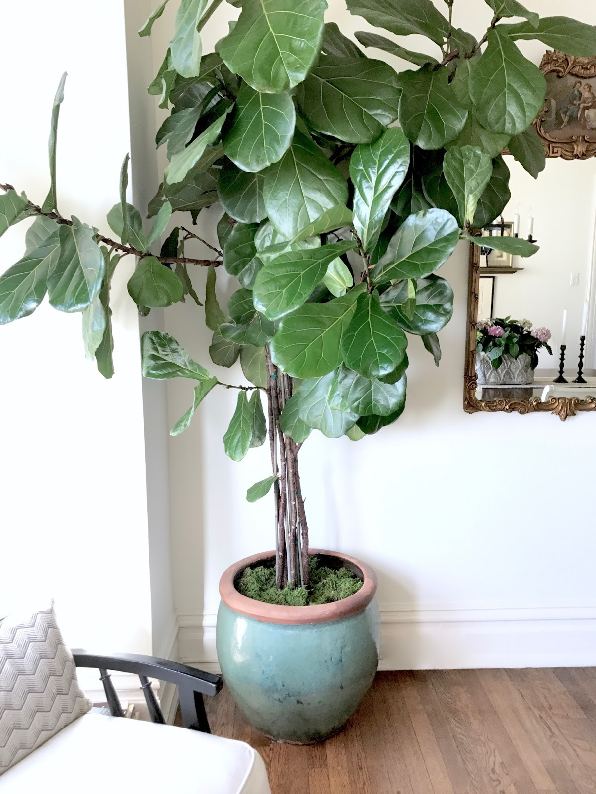 Classic Casual Home 7 Ways To Refresh With Indoor Plants And Some Cool Fashion