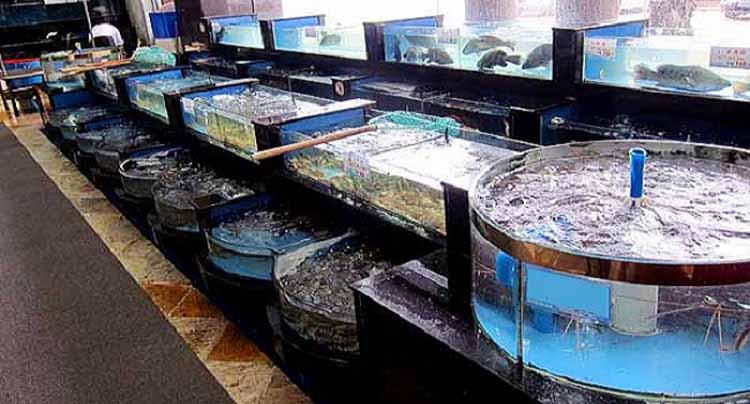 Các tác dụng bất ngờ của hồ hải sản nhà hàng