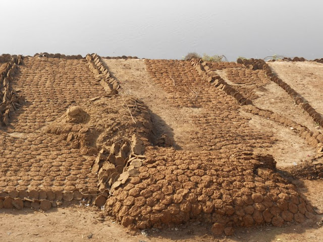 Fuel patties made from dung drying in the sun in Agra India