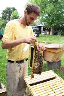 Marc mit Bienen und Top Bar