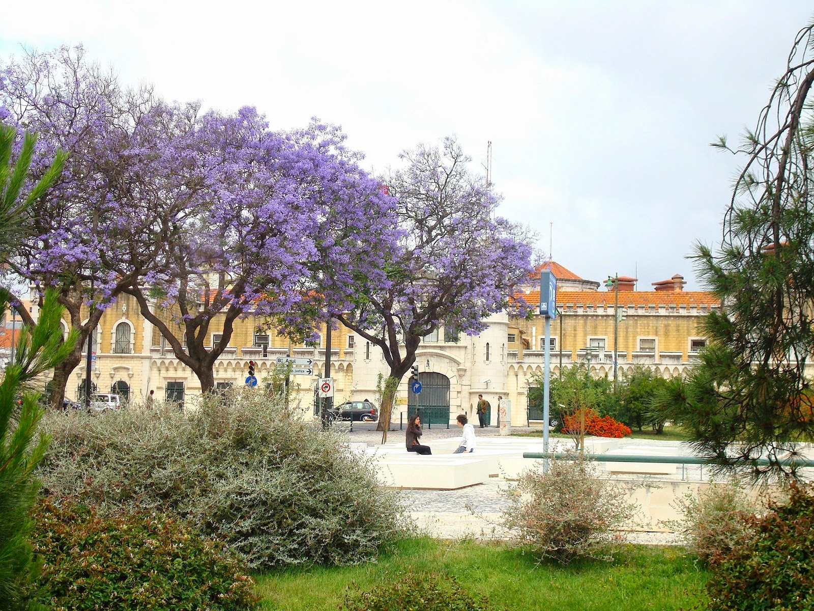 Jacaranda Purple Flowers, Lisbon