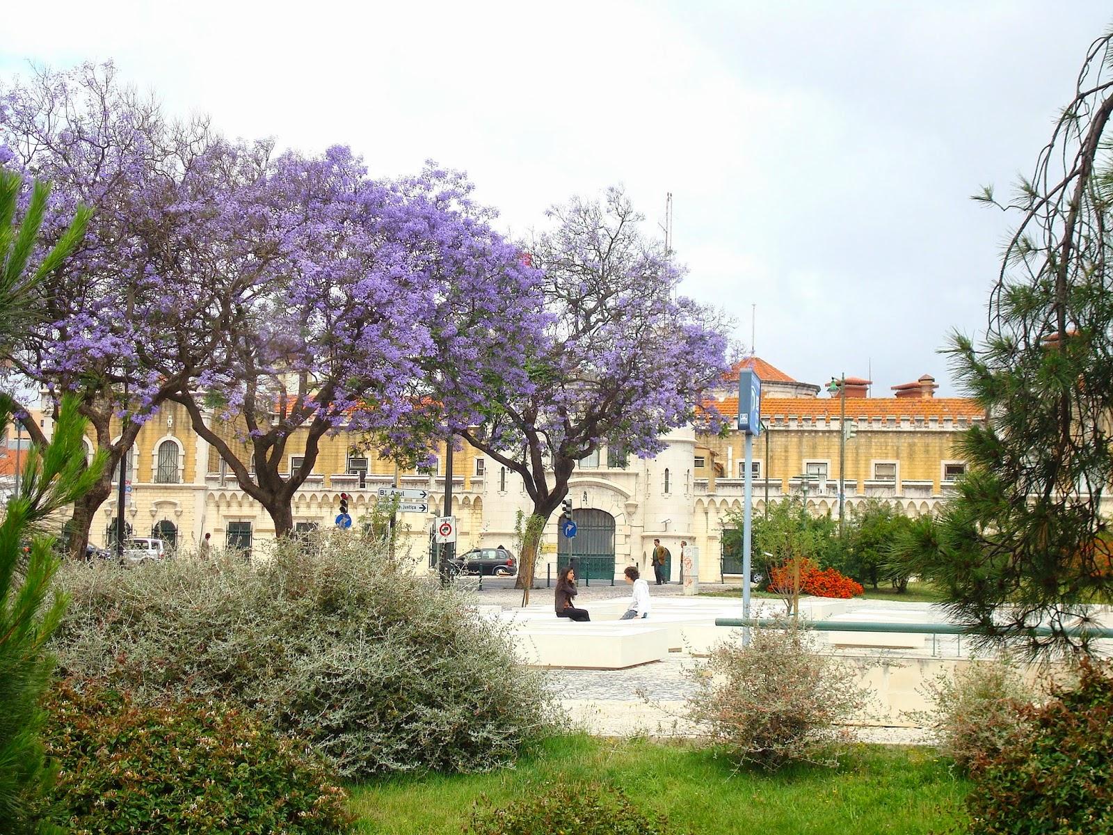 Jacaranda Purple Flowers, Lisbon