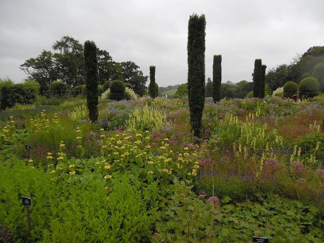 angielska rabata bylinowa, English garden, cis kolumnowy