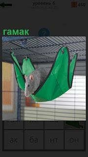 На сетке подвешен зеленый гамак в котором находится грызун