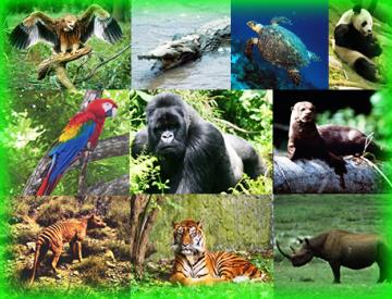 animales: Animales En Peligro De Extincion!