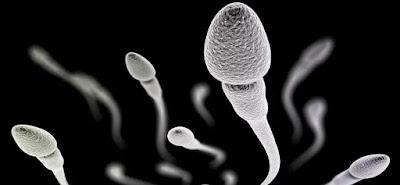 Pengakuan Wanita Setelah Menelan Sperma Pasangannya