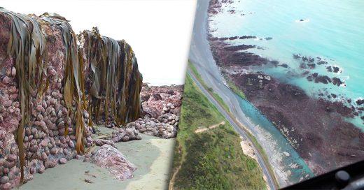 Terremoto causa que el fondo del mar se eleve 2 metros