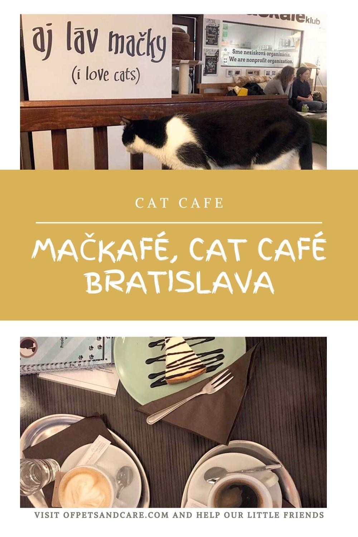 Mačkafé, Cat Café Bratislava