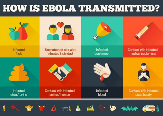 Ebola Virus Transmission In Humans