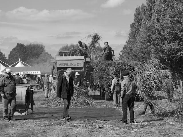 Le battage du blé noir Merlin-batteuse-fete-de-la-galette-pipriac-2018-musardise-pays-de-vilaine-sarrasin-ble-noir-bretagne-