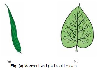 To study the external features of root, stem, leaf and ...