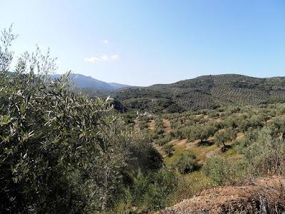 Olive Groves, Sierra Sur de Jaen, Andalusia, Spain