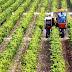 Ενίσχυση αγροτικών προϊόντων με τελικό προϊόν γεωργικό