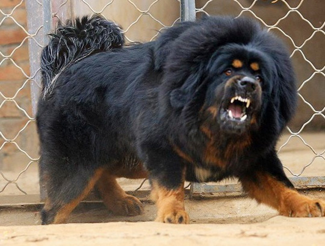 Most intimidating looking dogs