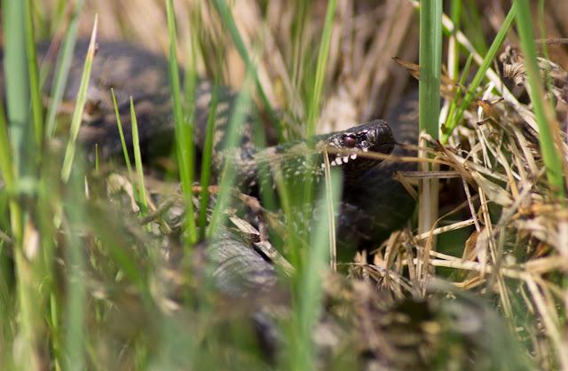 салат змеиное логово с фото
