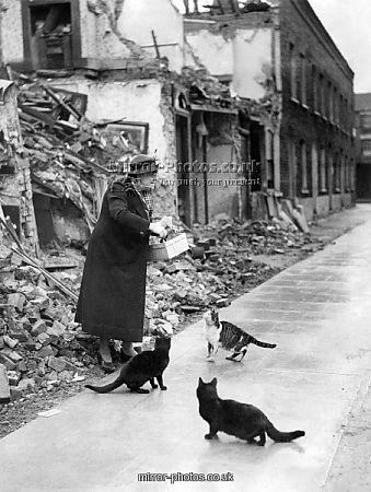 cats world war two worldwartwo.filminspector.com