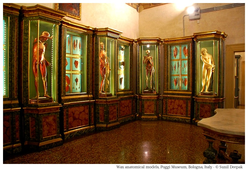 Wax anatomical models of Enrico Lelli at Palazzo Poggi of Bologna, Italy - Image by Sunil Deepak