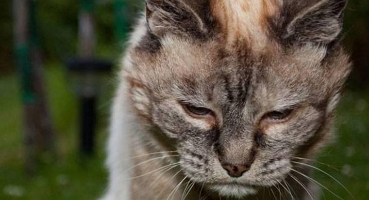 Πως θα καταλάβουμε ότι η γάτα μας πονάει;
