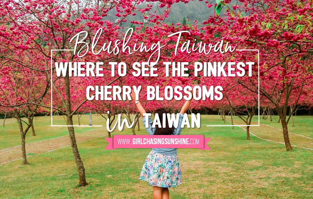Blushing Taiwan Where To See The Pinkest Cherry Blossoms In