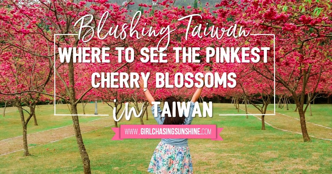 Blushing Taiwan Where To See The Pinkest Cherry