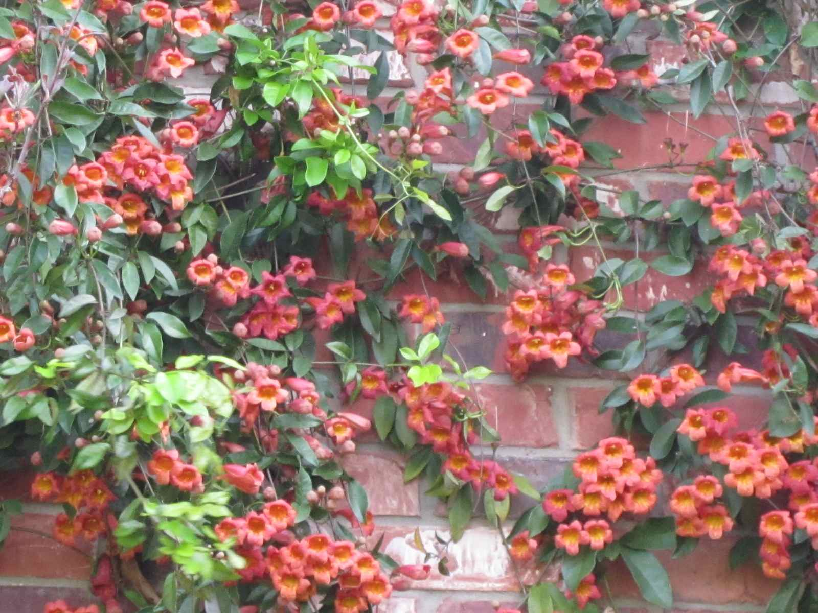 Roses And Other Gardening Joys: Deck The Wall