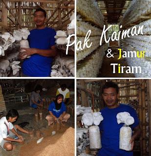 Menjadi Preman, tapi tidak pernah melukai korban. Pak Kaiman secepatnya sadar dan mulai belajar Jamur Tiram di kota Kembang: Bandung. Semenjak Pria lulusan kelas 5 SD mulai memproduksi bibit Jamur Tiram di tahun 2008, Jatiman Food telah sukses mendapatkan omzet sebesar Rp. 4,2 Milyar/tahun dan mampu mengekspor produknya ke Korea Selatan dan Cina, serta pasar lokal: Surabaya, Bali, Tarakan, dan Balik Papan.