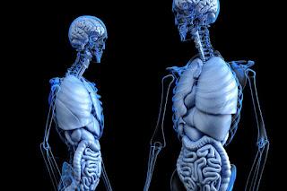 Jelita – uśpiony mózg, psychoneuroimmunologia i kawałek z życia