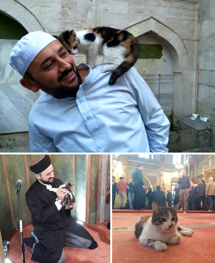 40 Times 2016 Restored Our Faith In Humanity - Imam Opens Mosque's Doors To Stray Cats To Keep Them Warm