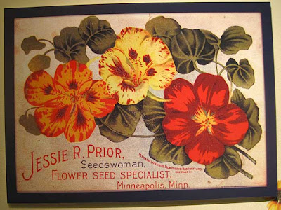 Litho of yellow and orange nasturtiums