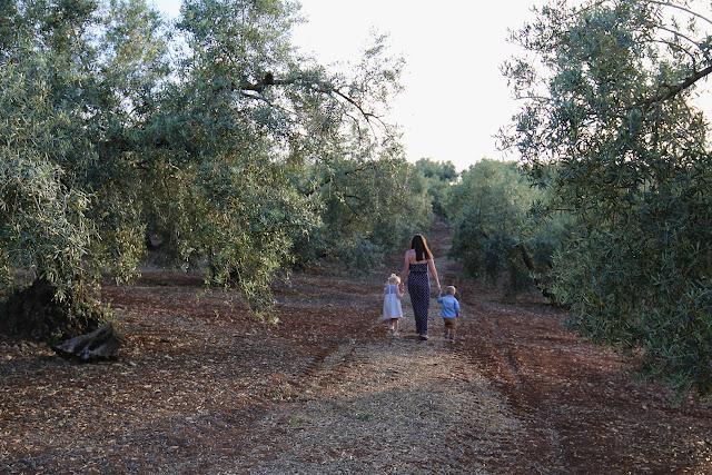 Urlaub mit Kindern - Andalusien - Spanien - Olivenplantage