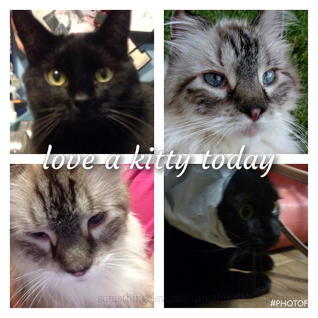 https://2.bp.blogspot.com/-pBX-vmGLxc8/WE0eRjAMV_I/AAAAAAABQ7A/HFnAeJa978UiIJ7J98aqu3xdlBcEvTgqACK4B/s640/kitty%2Bcats10.jpg