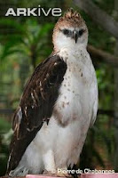 selamatkan burung di indonesia dari kepunahan