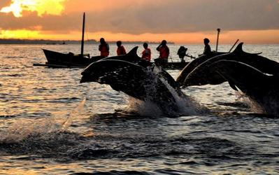 Tempat wisata Pantai lovina bali