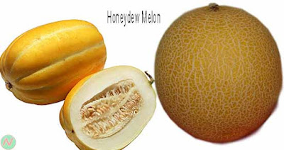 honeydew melon fruit; honeydew melon