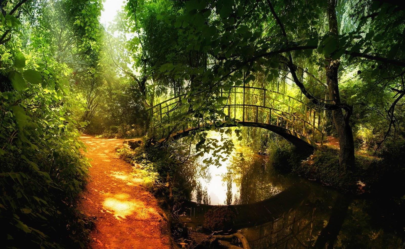 Afbeeldingsresultaat voor brug in bos