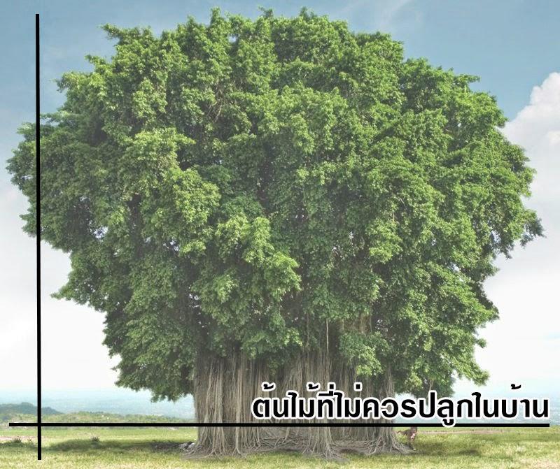 รวมต้นไม้ที่ไม่ควรปลูกใน้บาน