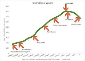 Hominid brain size evolution